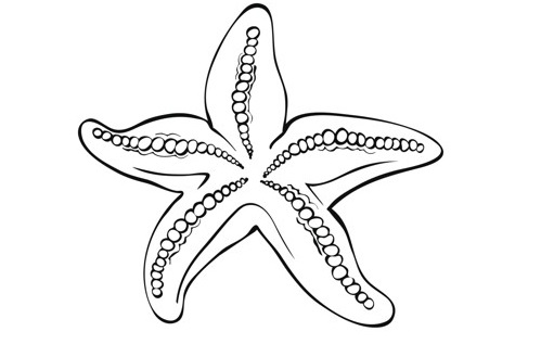 Starfish Tattoo - Meaning, Symbolism, Designs and Ideas