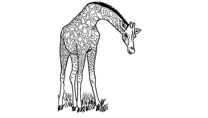 Giraffe Tattoo - Meaning, Symbolism, Designs, and Ideas