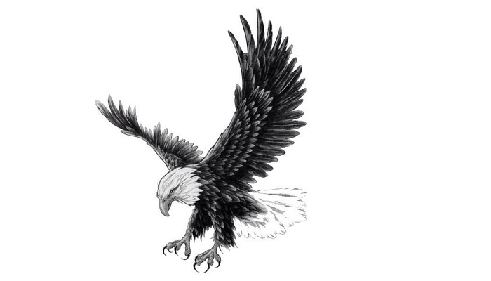 Hawk Tattoo - Meaning, Symbolism, Designs, and Ideas